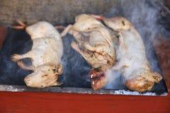 Ινδικό χοιρίδιο που ψήνεται - παραδοσιακό γεύμα στο Περού στοκ φωτογραφία με δικαίωμα ελεύθερης χρήσης