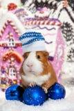 Ινδικό χοιρίδιο στο χειμερινό καπέλο πέρα από την ανασκόπηση Χριστουγέννων Στοκ φωτογραφία με δικαίωμα ελεύθερης χρήσης