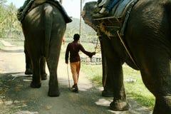 ινδικό mahout ελεφάντων στοκ εικόνες με δικαίωμα ελεύθερης χρήσης