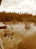 ινδονησιακή ζούγκλα Στοκ φωτογραφία με δικαίωμα ελεύθερης χρήσης