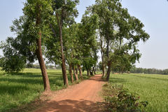Ινδία αγροτική στοκ φωτογραφία με δικαίωμα ελεύθερης χρήσης