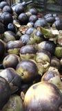 Ινδικά φρούτα φοινικών στοκ εικόνες με δικαίωμα ελεύθερης χρήσης