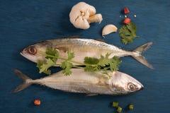 Ινδικά ψάρια σκουμπριών που διακοσμούνται με το φύλλο, το σκόρδο και τη φέτα κορίανδρου του κόκκινου και πράσινου πιπεριού τσίλι Στοκ Εικόνες