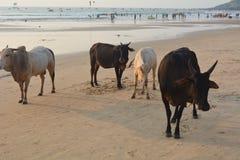 Ινδική παραλία Στοκ φωτογραφίες με δικαίωμα ελεύθερης χρήσης