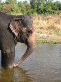 Ινδικός ελέφαντας που παίρνει ένα λουτρό στον ποταμό Στοκ φωτογραφία με δικαίωμα ελεύθερης χρήσης
