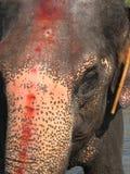 Ινδικός ελέφαντας που παίρνει ένα λουτρό στον ποταμό Στοκ εικόνα με δικαίωμα ελεύθερης χρήσης