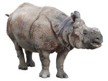 Ινδικός ρινόκερος ή μεγαλύτερος ένας-κερασφόρος ρινόκερος στο άσπρο υπόβαθρο Στοκ Εικόνες