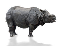 Ινδικός ρινόκερος Στοκ εικόνα με δικαίωμα ελεύθερης χρήσης