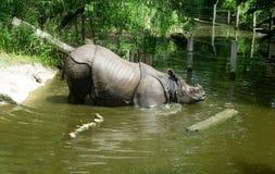 ινδικός ρινόκερος Στοκ Φωτογραφία