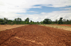 Ινδικός τομέας ρυζιού Στοκ Φωτογραφίες