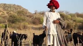Ινδικός φύλακας βοοειδών που περπατά κάτω από τον τομέα με τα βοοειδή που βόσκουν κατά μέρος απόθεμα βίντεο