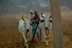 Ινδικός kisan με το hal Στοκ φωτογραφία με δικαίωμα ελεύθερης χρήσης