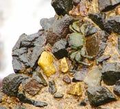 Ινδικό καβούρι λάσπης - Scylla Serrata - μεταξύ των πετρών Στοκ εικόνες με δικαίωμα ελεύθερης χρήσης