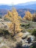 Ινδικό καλοκαίρι υψηλό στα βουνά Στοκ φωτογραφία με δικαίωμα ελεύθερης χρήσης