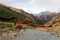 ινδικό καλοκαίρι Όμορφα χρωματισμένα δέντρα, δάσος, κατά μήκος Carretera νότιου, Χιλή Στοκ φωτογραφίες με δικαίωμα ελεύθερης χρήσης