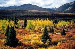 Ινδικό καλοκαίρι, Yukon, Καναδάς Στοκ εικόνα με δικαίωμα ελεύθερης χρήσης