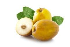Ινδικό mauritiana Ziziphus φρούτων (Chinee Apple) Στοκ Εικόνες