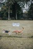 Ινδονησία Τζακάρτα Στοκ Φωτογραφίες
