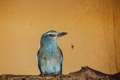 διογκωμένος μπλε κύλινδ& Στοκ Εικόνες