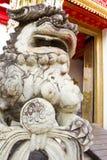 λιοντάρι ζοφερό Στοκ Φωτογραφίες
