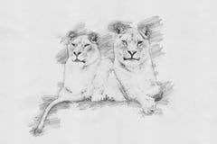 λιοντάρι Σκίτσο με το μολύβι Στοκ φωτογραφία με δικαίωμα ελεύθερης χρήσης