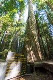 10 Ιουλίου 2018 - Klamath, ασβέστιο: Σημάδι για το γιγαντιαίο δέντρο στο εθνικό πάρκο Redwood, που δίνει τις στατιστικές του στοκ εικόνες