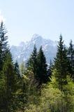 Ιουλιανές Άλπεις από το δάσος Στοκ Εικόνες