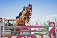 ιππικά άλογα αλόγων εκπαίδευσης αλόγου σε περιστροφές που πηδούν το αθλητικό διάνυσμα σκιαγραφιών αναβατών πόλο Στοκ Εικόνα