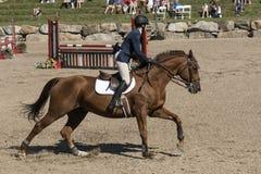 ιππικά άλογα αλόγων εκπαίδευσης αλόγου σε περιστροφές που πηδούν το αθλητικό διάνυσμα σκιαγραφιών αναβατών πόλο Στοκ Φωτογραφίες