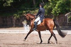 Ιππική εκπαίδευση αλόγου σε περιστροφές Στοκ εικόνα με δικαίωμα ελεύθερης χρήσης