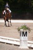 Ιππική εκπαίδευση αλόγου σε περιστροφές Στοκ εικόνες με δικαίωμα ελεύθερης χρήσης