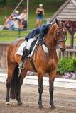 Ιππική εκπαίδευση αλόγου σε περιστροφές Στοκ Εικόνα