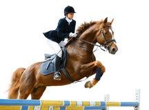 ιππικός άλτης Στοκ εικόνες με δικαίωμα ελεύθερης χρήσης