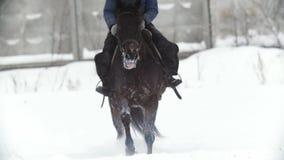 Ιππικός αθλητισμός - ένα άλογο που περπατά στο χιονώδη τομέα κατά τη διάρκεια του snawfall απόθεμα βίντεο