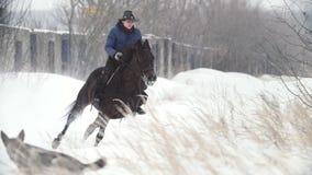 Ιππικός αθλητισμός - γυναίκα αναβατών στο γρήγορο άλογο που καλπάζει στο χιονώδη τομέα απόθεμα βίντεο