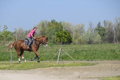 Ιππικός αθλητισμός με τους εφήβους Λέσχη αλόγων Ένα κορίτσι οδηγά το α στοκ εικόνες