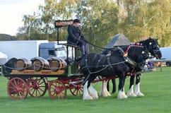 Ιππικό δίκαιο ζευγάρι της Ιστ Άνγκλια των βαριών αλόγων και του κάρρου Στοκ εικόνες με δικαίωμα ελεύθερης χρήσης