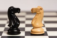 Ιππότες Staunton στον πίνακα σκακιού Στοκ Φωτογραφίες