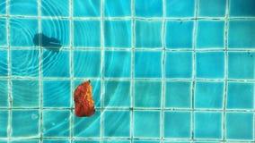 Ιριδίζον νερό σε μια λίμνη απόθεμα βίντεο
