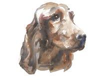 Ιρλανδικός ρυθμιστής - ζωγραφισμένο στο χέρι σκυλί watercolor ελεύθερη απεικόνιση δικαιώματος