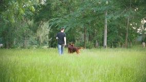 Ιρλανδικός ρυθμιστής σκυλιών που τρέχει στο πάρκο με τον ιδιοκτήτη του - άτομο, σε αργή κίνηση απόθεμα βίντεο