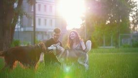 Ιρλανδικός ρυθμιστής φυλής σκυλιών με το γεροδεμένο παιχνίδι στη χλόη και το νέο ζεύγος που έχουν ένα υπόλοιπο στο θερινό ηλιοβασ φιλμ μικρού μήκους