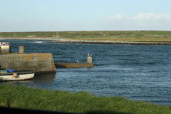 ιρλανδικό μόνο seagull Στοκ φωτογραφία με δικαίωμα ελεύθερης χρήσης