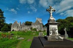 Ιρλανδία, ιρλανδική αγελάδα κοβαλτίου, αβαείο Muckross, Killarney Στοκ Εικόνα