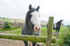 Ιρλανδικά άλογα στη μάντρα, Wicklow βουνά, Ιρλανδία Στοκ φωτογραφία με δικαίωμα ελεύθερης χρήσης