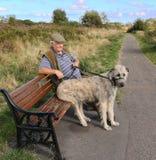 Ιρλανδική συνεδρίαση κυνηγόσκυλων λύκων στον πάγκο πάρκων Στοκ Φωτογραφία