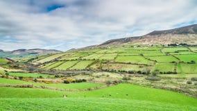 Ιρλανδικοί πράσινοι τομείς ακριβώς έξω από Dingle Dingle στη χερσόνησο Στοκ φωτογραφία με δικαίωμα ελεύθερης χρήσης