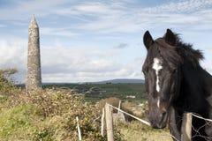 Ιρλανδικό άλογο και αρχαίος στρογγυλός πύργος Στοκ εικόνες με δικαίωμα ελεύθερης χρήσης