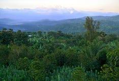Ισημερινή ζούγκλα. Βουνά που καλύπτονται με την πυκνή ζούγκλα. Αφρική, Στοκ Εικόνες
