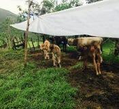 Ισημερινός Στοκ Φωτογραφία